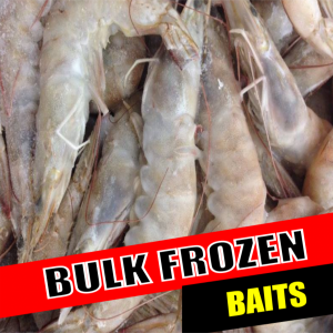 Solent Baits Quality Fresh and Frozen sea fishing Baits Mail