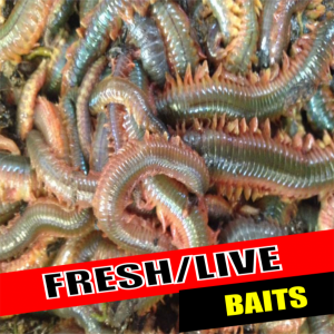 Fresh And Live Baits
